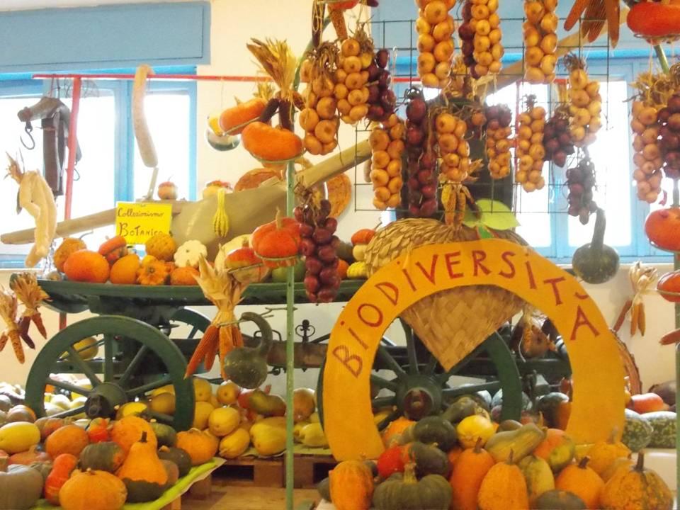 5 settembre -> 8 novembre 2020 - LA CASA DELLE ZUCCHE di Tutto Zucche - Andezeno (TO)